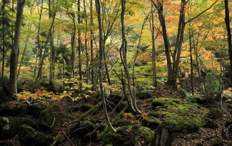 智頭町森林セラピー推進協議会プロフィール画像