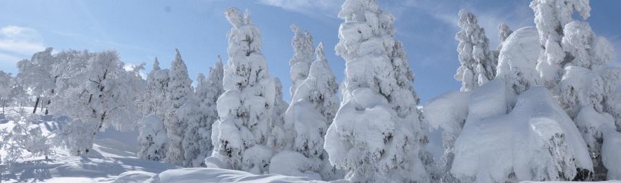 氷ノ山自然ふれあい館 響の森イメージ画像